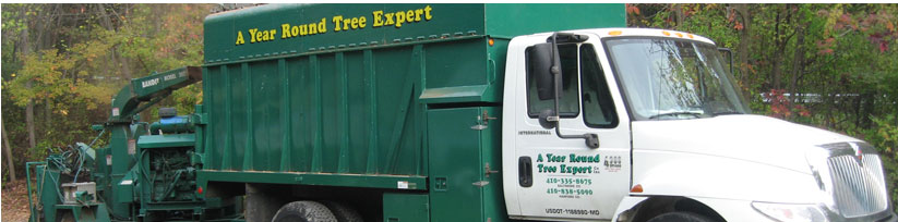 Baltimore and Harford Tree Service Company Expert
