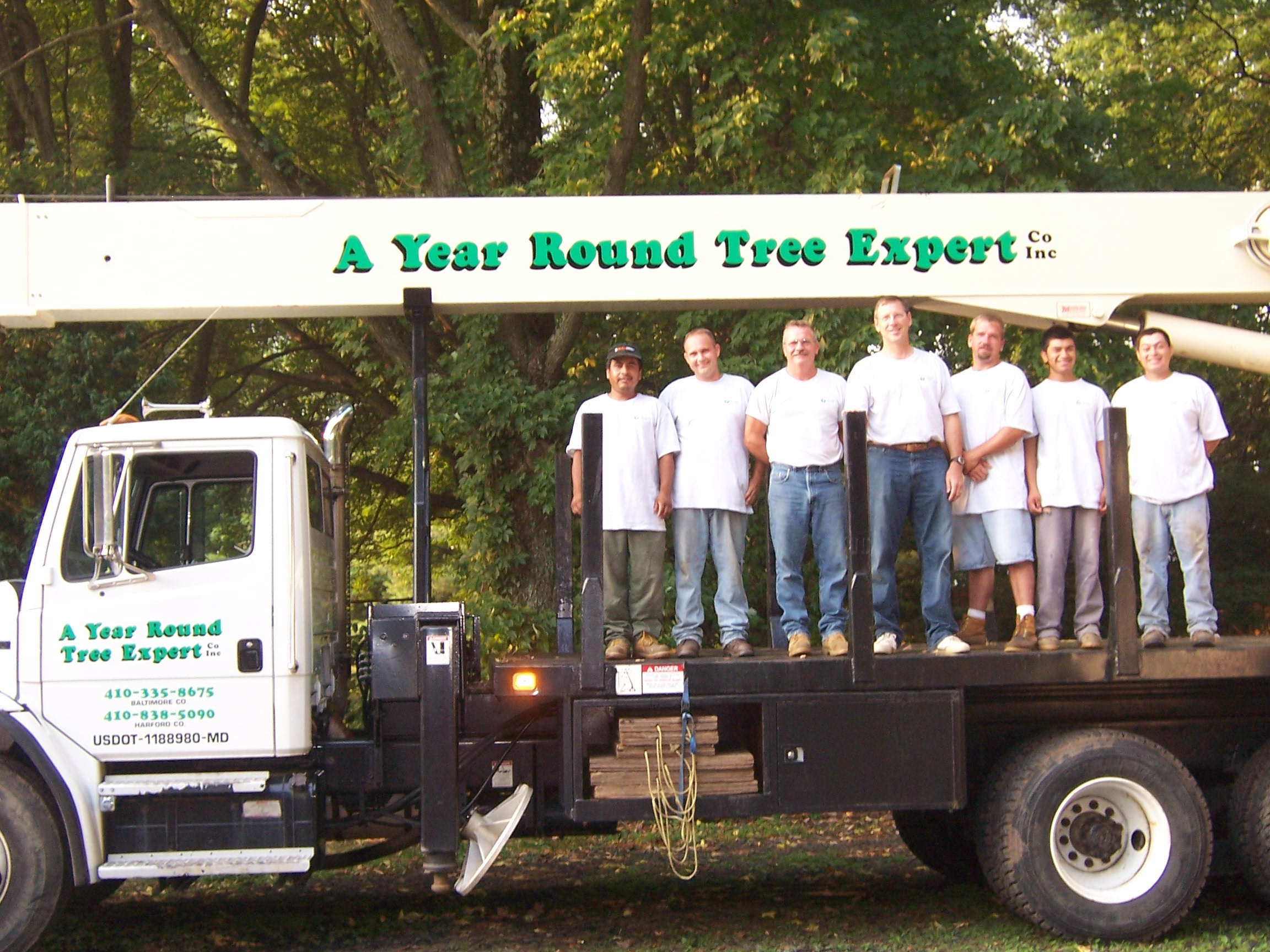 Baltimore and Belair Tree Service Company Removing Trees